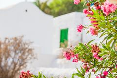 Typical greek traditional village with white walls and colorful doors with sea view on Mykonos Island, in Greece. Typical greek traditional village with white royalty free stock photos