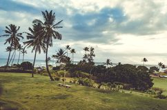 Green vegetation, palm trees and cloudy sky near the sea in Hawaii, US. Typical green scene from Hawaii, where vegetation and grass reach the shore line stock images