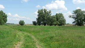 Typical Havelland landscape with meadow (Germany). path leading over the meadow.  stock video