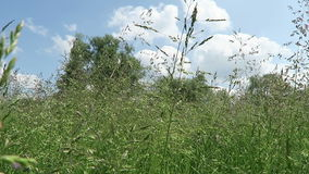 Typical Havelland landscape with meadow (Germany). view from below to the sky. Typical Havelland landscape with meadow (Germany). view from below to the sky stock footage