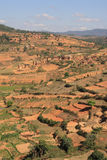 Typical Highland View. Of terraced paddy fields of Madagascar royalty free stock image