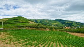 Rural landscape on Sao Miguel island, Azores, Portugal stock photo