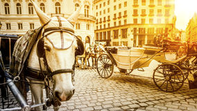 Typical horse carriage in Vienna Austria Stock Photos