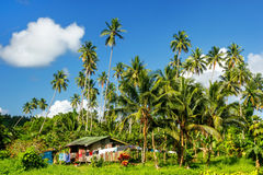 Typical house in Bouma village surrounded by palm trees on Taveuni Island, Fiji. Taveuni is the third largest island in Fiji stock photos