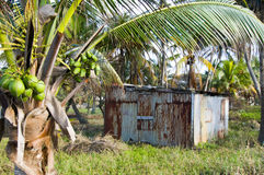 Typical house corn island nicaragua Stock Images
