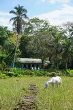 Typical house with a horse in pasture Costa Rica Royalty Free Stock Photography