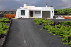 Typical house of Lanzarote. Between the vineyards  in La Geria Stock Photos