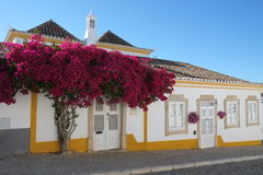 Typical house and tree in Tavira, Algarve Stock Photos