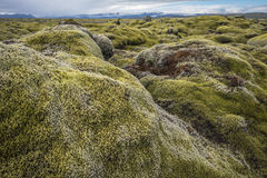 Typical Icelandic view of moss covered rocks and glaciers. Royalty Free Stock Photos