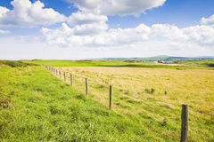 Typical Irish flat landscape with fields of grass and wooden fen. Ce for grazing animals Ireland royalty free stock photos