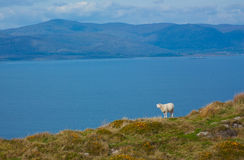A typical Irish view. At the atlantic ocean Royalty Free Stock Photo