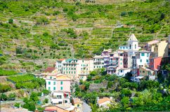 Typical italian buildings houses and green vineyard terraces in valley of Manarola village National park Cinque Terre royalty free stock images