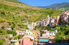 Typical italian buildings houses and green vineyard terraces in valley of Manarola village National park Cinque Terre. In sunny day blue sky background, La stock photos