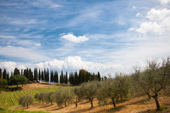 Typical italian countryside Stock Images