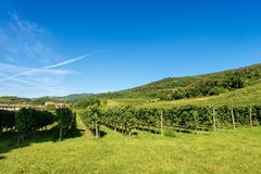 Italian Vineyards - Valpolicella Wine - Verona. Typical Italian red grape vineyards at the base of the hill with blue sky. Valpolicella Wine - Verona, Italy royalty free stock images
