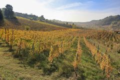 Typical italian view of vineyard landscape stock images