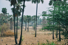 A typical jungle near Bagan. Royalty Free Stock Image
