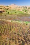 Typical landscape. Of Malagasy highlands near Ampefy, Madagascar Stock Photos
