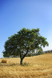 Typical landscape of the  Alentejo. Stock Photography