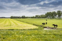 Typical landscape of carved fields in Holland. edam netherlands. stock photography