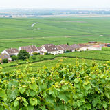 Typical landscape in Champagne-Ardenne Royalty Free Stock Photo