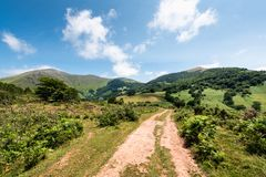 Unpaved road surrounded by ferns with mountain range on the back Royalty Free Stock Image