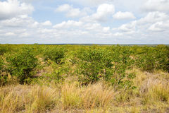Typical landscape in Kruger National Park Royalty Free Stock Images