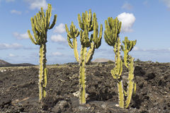Typical landscape of Lanzarote Stock Photos