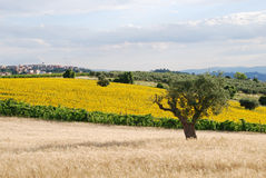 Typical landscape of the Marche region Royalty Free Stock Photography
