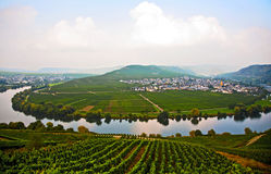 Typical landscape of Mosel vineyards near Trittenheim Royalty Free Stock Images
