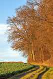 Typical landscape near the Alps in Bavaria during a warm wintertime Royalty Free Stock Photography