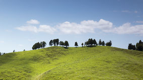 Typical landscape in north New Zealand Royalty Free Stock Photography