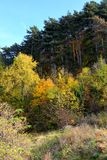 Typical landscape in the forest of Transylvania, Romania, Autumn characteristic colors Stock Photo
