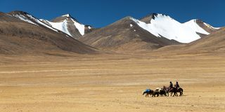 Typical Landscape in Rupshu valley with yaks caravan Royalty Free Stock Photo