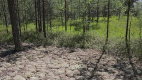 Typical landscape within the Siberian taiga stock footage