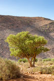 Typical landscape of southern Morocco. Stock Photos