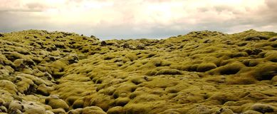 Typical landscape of the spectacular moss fields of Eldhraun moss covering lava rock in the south of Iceland stock photo