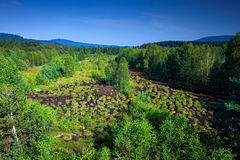 Typical landscape from Sumava national park in Czech Republic, Soumarske raseliniste. Green forest with blue sky. Peat bog place w Stock Photos