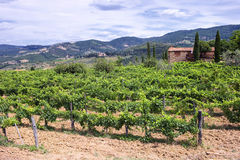 Typical landscape of Tuscany Royalty Free Stock Image