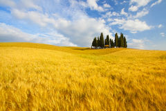 Typical landscape in Tuscany Stock Photo