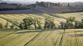 Typical landscape of Tuscany. With hills and the grass waving on a wind stock video