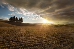 Typical landscape of Tuscany. Isolated cypresses in Val D`Orcia, a wonderful valley in the province of Siena - Tuscany Italy Stock Photography