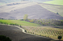 Typical landscape in the Tuscany. Royalty Free Stock Photo