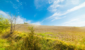 Typical landscape in Tuscany Royalty Free Stock Photos