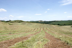 Typical landscape in Val d& x27;Orcia, Tuscany. Typical landscape in Val d& x27;Orcia, Tuscany, Italy at spring. Agricultural field Royalty Free Stock Photography
