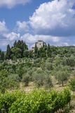 Landscape in Tuscany, Italy. Typical landscape with vineyards and olive trees in Tuscany, Italy, Europe Royalty Free Stock Photography