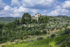 Landscape in Tuscany, Italy. Typical landscape with vineyards and olive trees in Tuscany, Italy, Europe Stock Photos