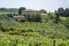 Landscape in Tuscany, Italy. Typical landscape with vineyards in Tuscany, Italy, Europe Stock Images