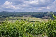 Landscape in Tuscany, Italy. Typical landscape with vineyards in Tuscany, Italy, Europe Stock Image