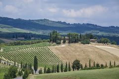 Landscape in Tuscany, Italy. Typical landscape with vineyards in Tuscany, Italy, Europe Royalty Free Stock Photo
